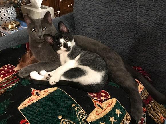 Benny & Toby