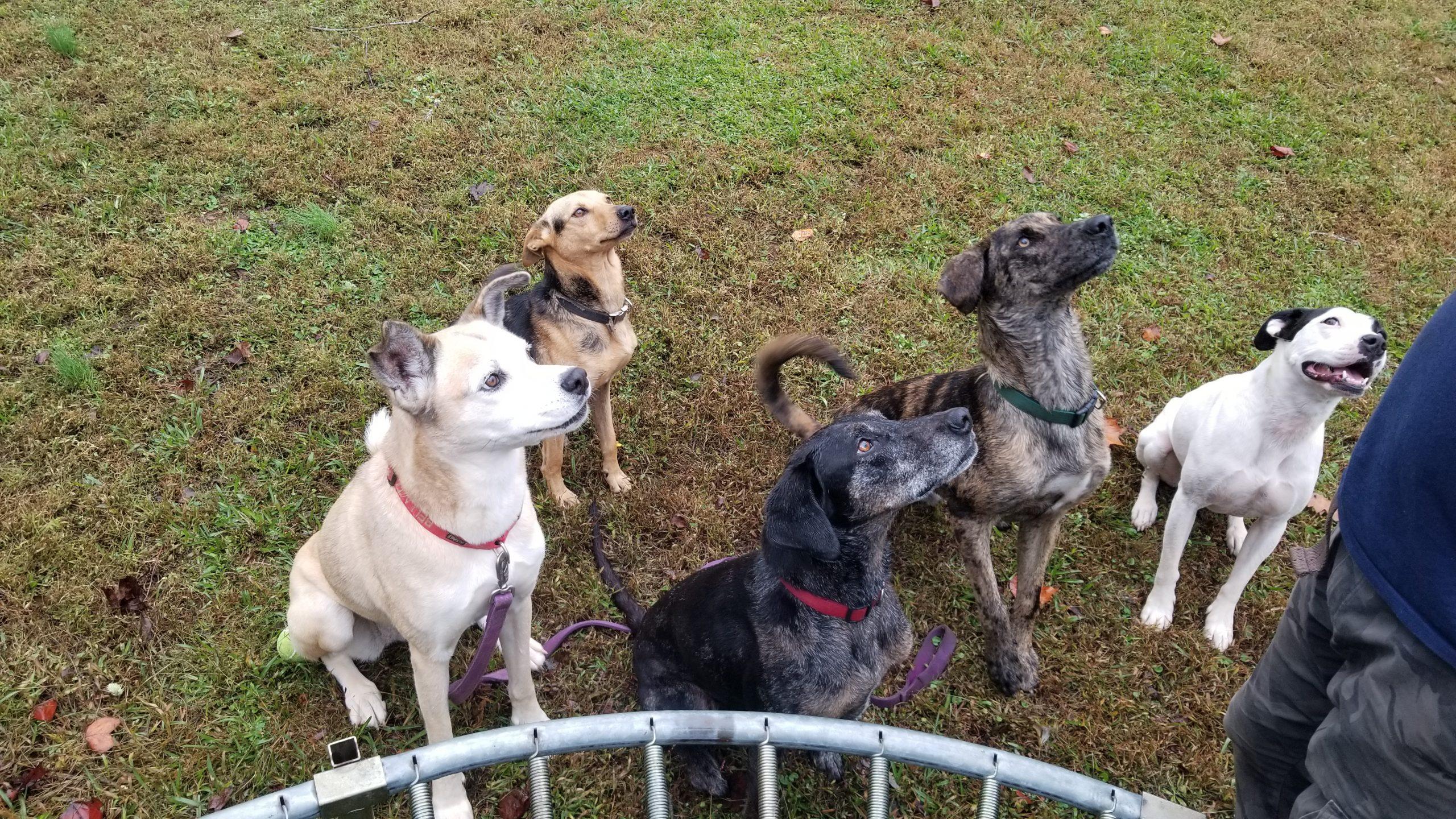 Bella, Pepper, Sage, Daisy, Basil